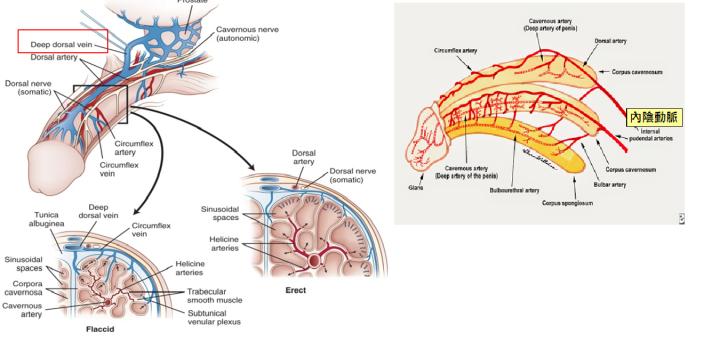 動靜脈.png